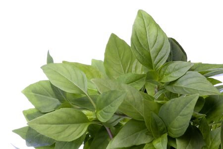 Isolated image of Thai Basil leaves.