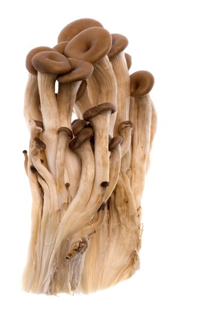 mycelium: Isolated macro image of Korean edible Mini Oyster Mushrooms. Stock Photo