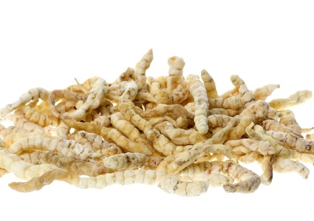 asian produce: Caterpillar fungus, Vegetable Caterpillar or Yarsagumba is a Chinese medicine product that is a result of a parasitic relationship between a Cordyceps fungus and a caterpillar. Stock Photo