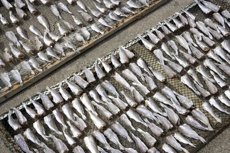 Image of salted fish being sun dried. photo