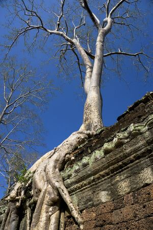 croft: Image of an enormous tree entwining the entrance to Ta Prohm, a UNESCO World Heritage Site located at Siem Reap, Cambodia. This is one of the temples in Siem Reap where the Hollywood movie Lara Croft Tomb Raider was filmed at.