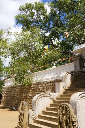 buddha sri lanka: Image of the holy Bo-tree at Bodhi Temple (Sri Maha Bodhiya), Anuradhapura, Sri Lanka. This tree was grown from a sapling of the very tree under which more than 2500 years ago Buddha found enlightenment. Stock Photo