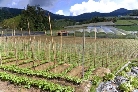 Image of a vegetable farm in Malaysia. Stock Photo - 8890053