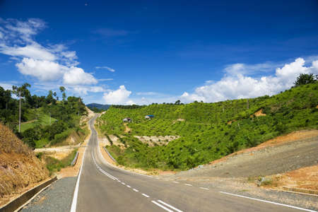 Image of a new road through an oil palm estate at Tawau, Malaysia. photo