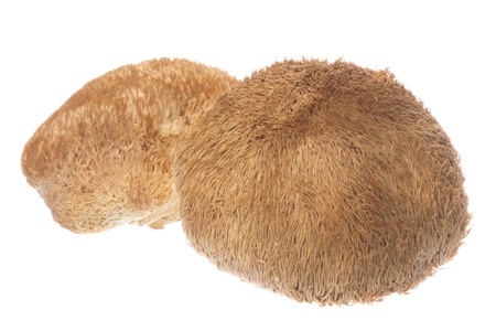 pom: Isolated image of Monkey Head Mushrooms (also known as Lions Mane Mushroom, Bearded Tooth Mushroom, Hedgehog Mushroom, Bearded Hedgehog Mushroom, Pom Pom mushroom, or Bearded Tooth Fungus) Stock Photo
