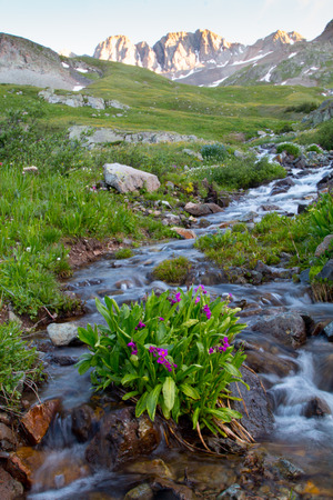 soft peak: wildflowers in the middle of a mountain stream