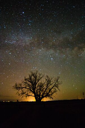 lone  tree: MIlky Way over a lone tree with the sun starting to rise