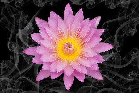 pink smoke: Pink lotus flower isolated on black background with spiral of smoke Stock Photo