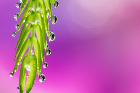 reflection of life: Soft focus of droplets on green leaf with sweet blurred pink background Stock Photo