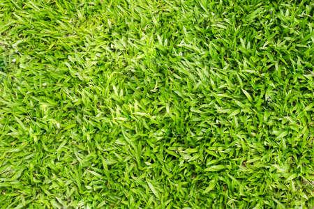 water background: Fresh green grass background Stock Photo