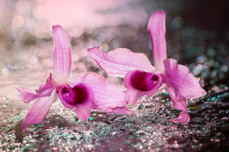 pink orchid: Soft blurred focus of pink orchid flowers on blurred water droplet with sweet tone