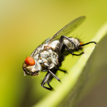 head shot: Side shot macro of fly on leaf on blurred green background
