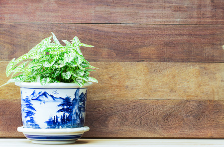 porcelain flower: Fresh foliage in blue porcelain flower pot on wooden background