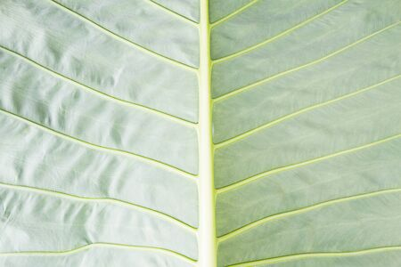 green background: Green leaf texture background Stock Photo