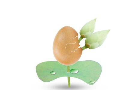eggshell: Eggshell, lotus flowers and lotus leaf with droplet isolated on white background, growth conceptual
