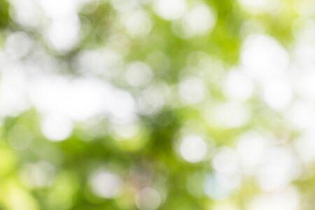 Blurred green-white bokeh background Stockfoto