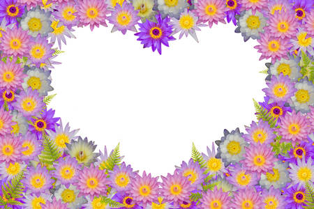 heart shaped leaves: Pink purple heart shaped lotus flowers and green fern leaves on white background