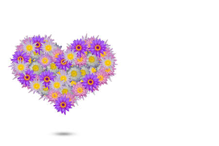heart shaped: Pink purple heart shaped lotus flowers on white background
