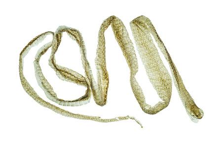 Shedding snake skin on white background