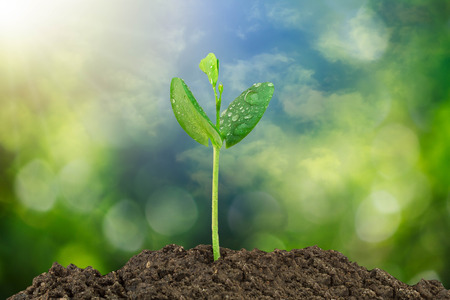 Sprout growing from soil on blurred green bokeh and sky background, environmental concept Stock Photo