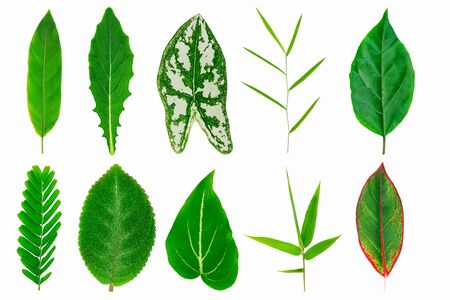 Collection of fresh tropical green leaves texture isolated on white background