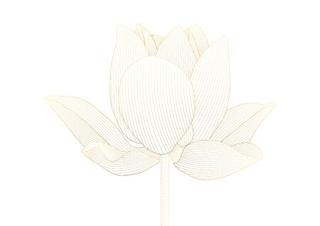 Luxury golden lotus flower floral on white background vector illustration