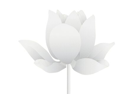 Luxury silver lotus flower on white background vector illustration