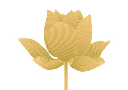 Luxury gold lotus flower floral on white background vector illustration 일러스트