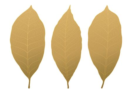 Golden leaves texture abstract background vector illustration