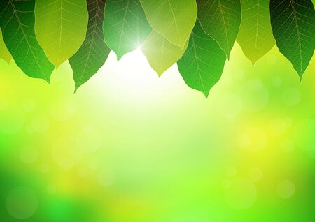 Leaves with soft bright bokeh and sunlight, fresh green nature background vector illustration