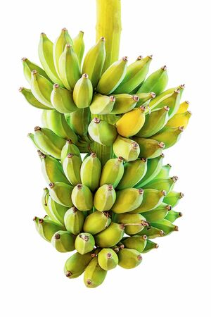 Cluster of young green unripe bananas isolated on white background