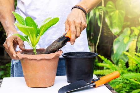 Gardener holding gardening shovel and planting lettuce in clay pot on blurred garden background Stock fotó