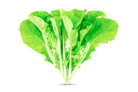Fresh green lettuce isolated on white background Standard-Bild - 154309817