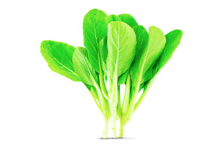 Fresh green lettuce isolated on white background Stock fotó - 154309821