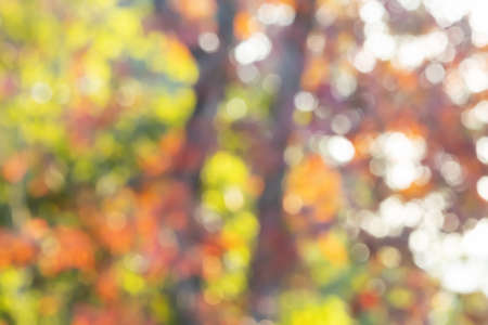 Blurred colorful forest nature bokeh abstract background Stock fotó