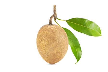 One fresh sapodilla with leaves on white background