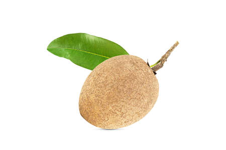 One fresh sapodilla with leaves on white background with clipping path