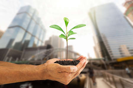 Hands holding green sprout on blurred city background, environmental concept