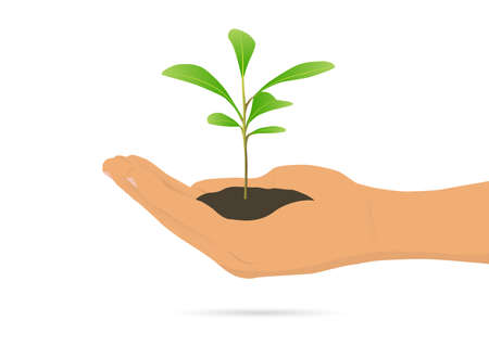 Hand holding green sprout on white background, environmental concept vector illustration