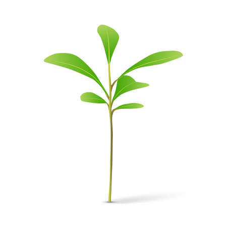 Green sprout on white background vector illustration