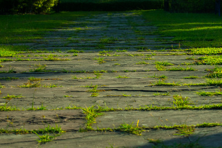 flagstone: Natural flagstone path landscaping in home garden Stock Photo