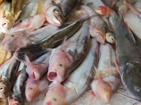 freshwater fish: Freshwater fish market in thailand Stock Photo