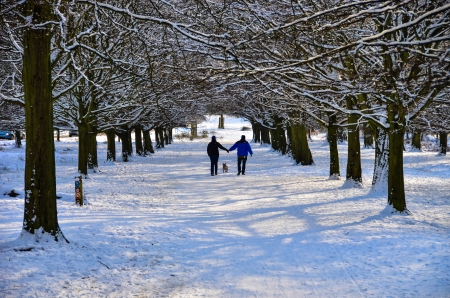 A couple walking a dog in snow covered Richmond Park