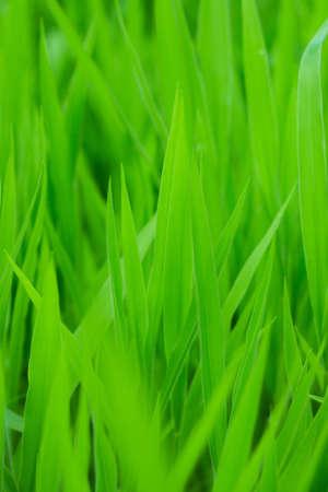 backgorund: fresh green grass backgorund