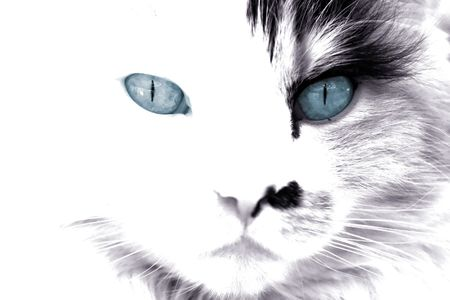 Black and white of a cat face with blue eyes