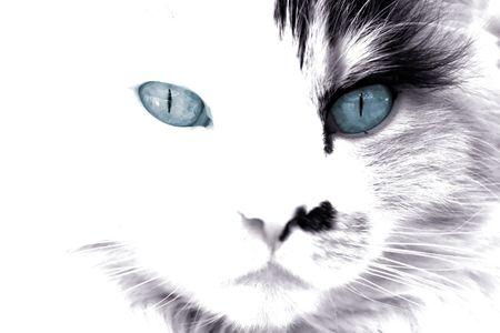 Zwarte en witte gezicht van een kat met blauwe ogen
