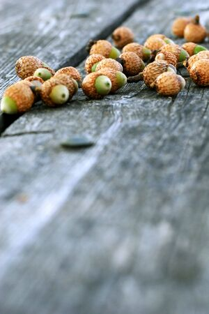 A collection of acorns sitting on the picnic table
