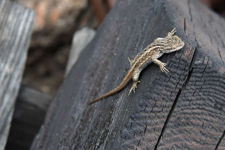 A lizard sunning itself on the edge of a piece of wood.