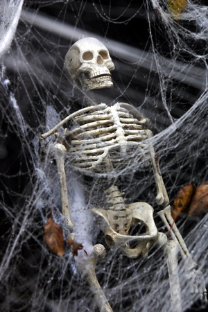 Human skeleton in a coffin seen through a thick spider web.