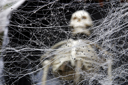 A tangled wet decorative spider web with a human skeleton in the background.